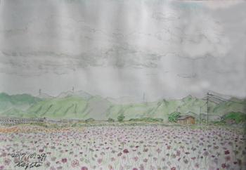 花の海.jpg